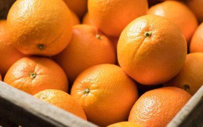 10 buenas razones para consumir naranjas todos los días